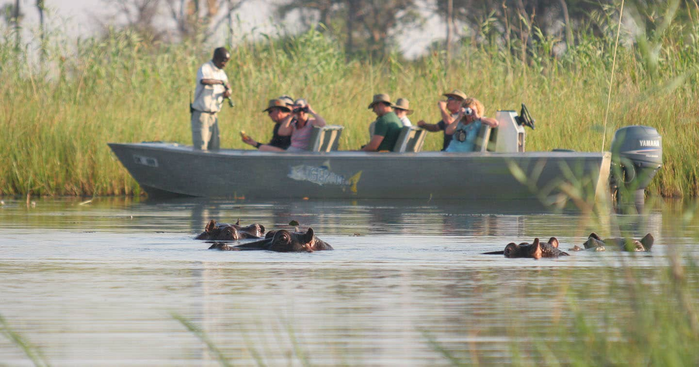 Hippos in the Okavango Delta near Gunns Camp in Botswana