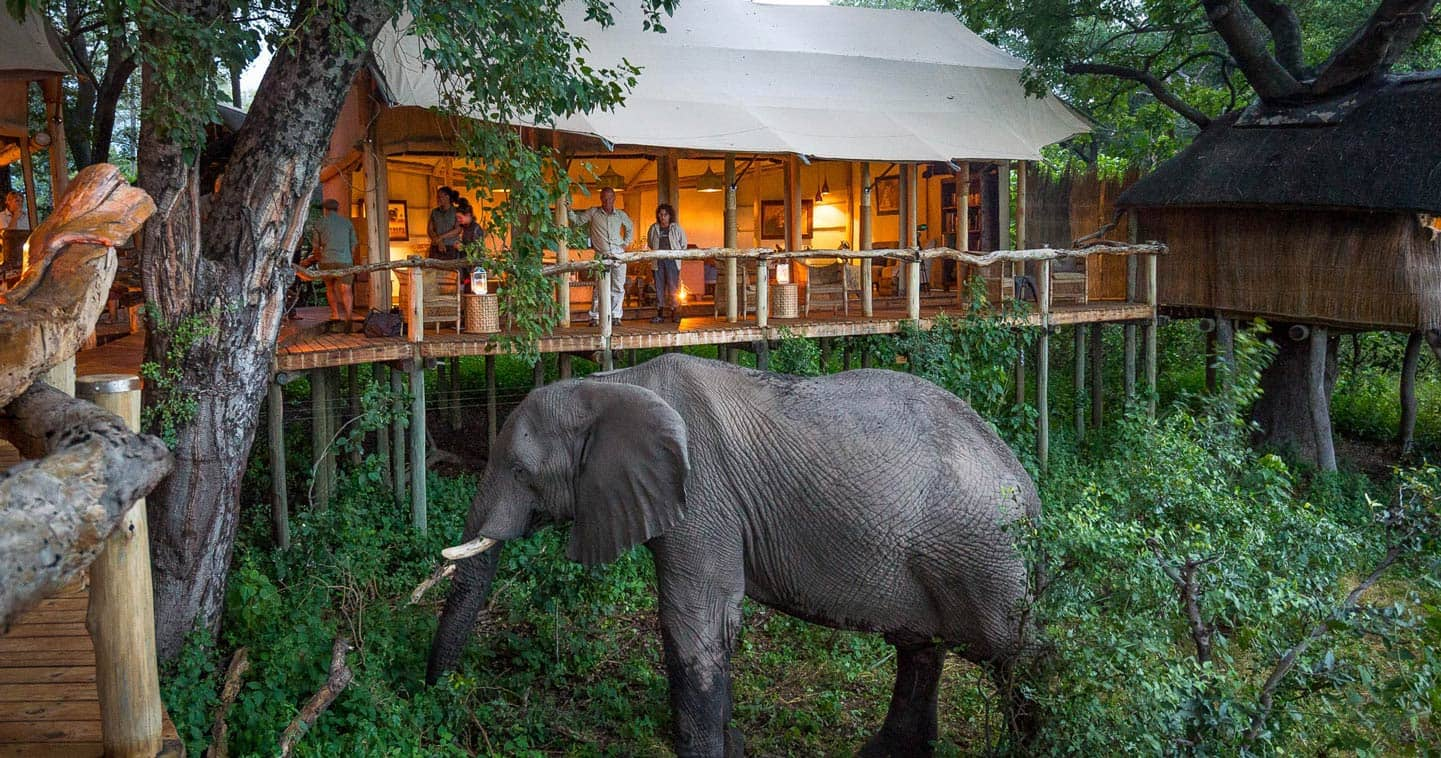 Stay at Tubu Tree Camp in the Okavango Delta for the Ultimate Safari Experience